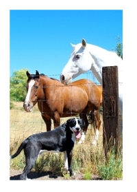 your horses dogs and cats want to tell you what's on their heart and mind