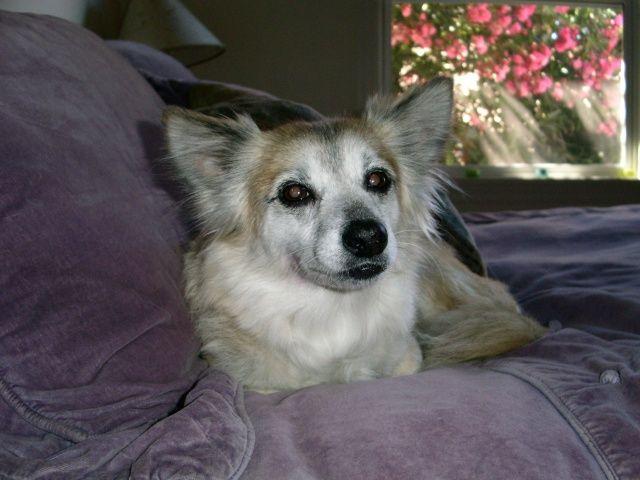 Dog whispering helps radio hosts dog Roxie