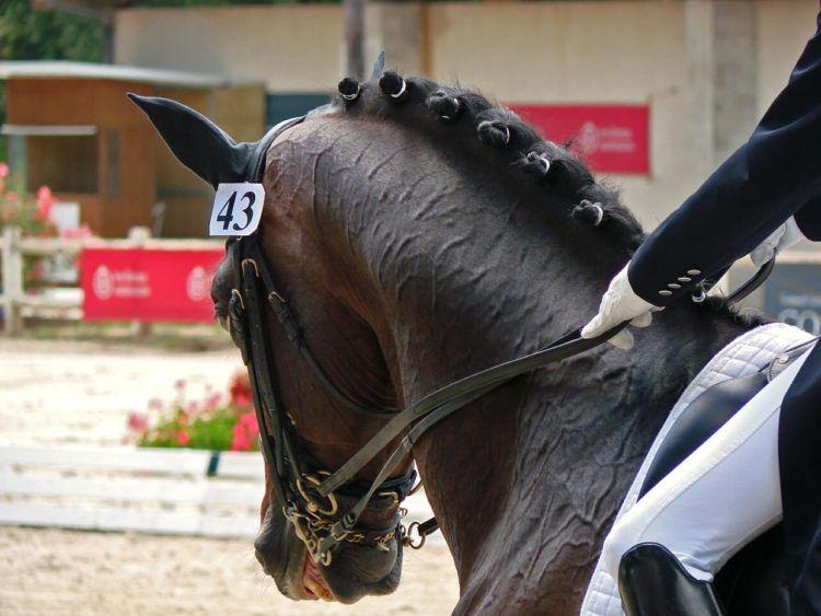 Sport Horses Need Horse Whisperer